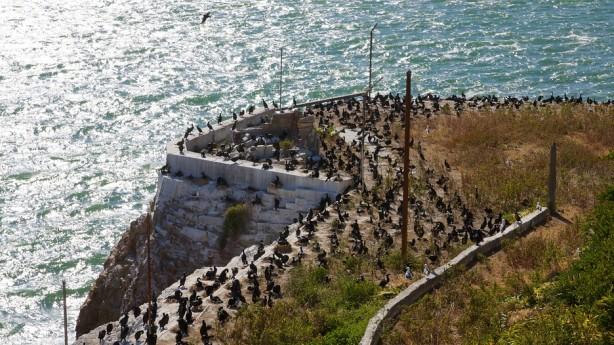 Alcatraz-Island-